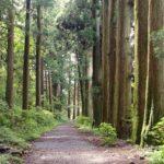 旧東海道杉並木