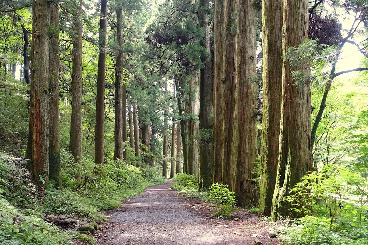 Old Tokaido Cedar Avenue